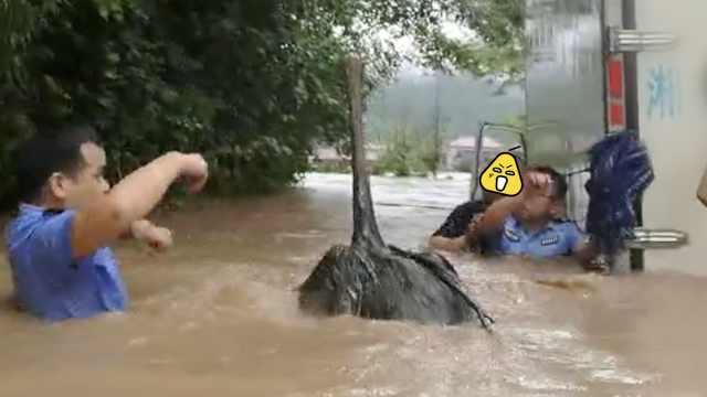 民警水中救援,突然蹦出一只鸵鸟…