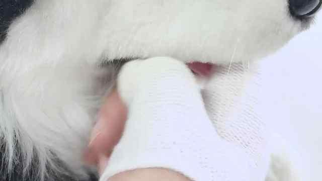 #星宠开箱啦#让猫咪爱上刷牙