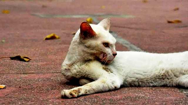 虐猫视频被曝成赚钱工具:付费观看