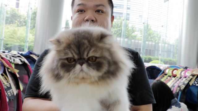 亲生的!波斯猫和主人撞脸:一毛一样