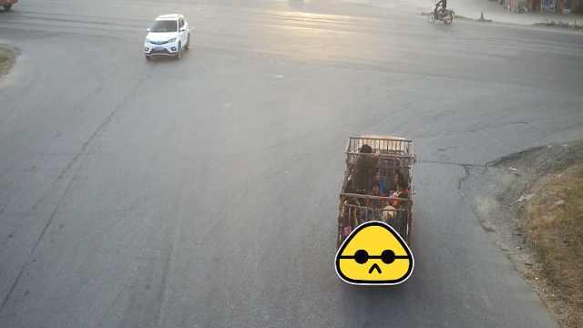 雷人!运猪小货车违规载21名乘客