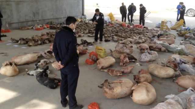 假装运苹果,44人贩卖上万野生动物