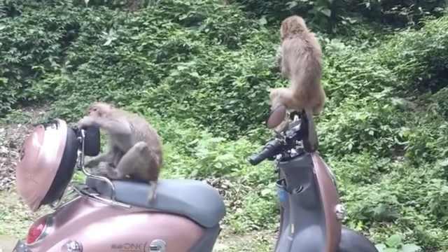 生活太苦!猴哥抢不到食物饿到啃车