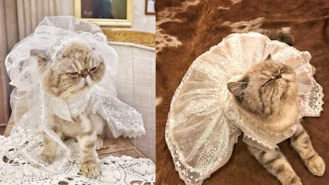 90后设计复古婚纱,猫见了也想了解