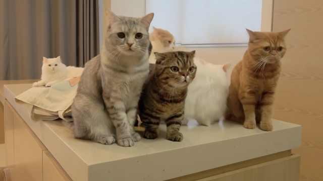 喂猫途中突然跑掉,猫猫啥反应?