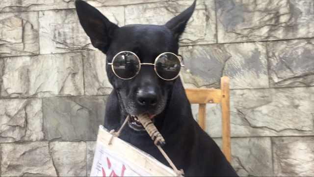 黑狗戴墨镜卖油茶4年,会接送熟人