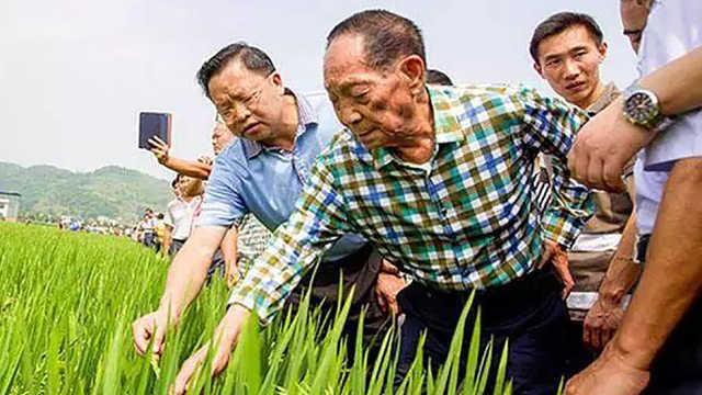为什么迪拜请中国人去沙漠种水稻?