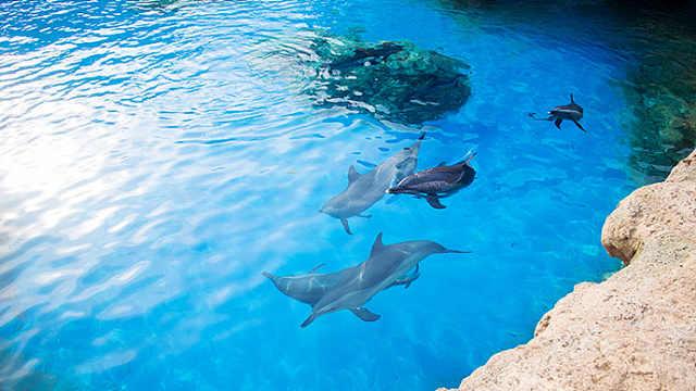 日本导演拍纪录片,为捕杀海豚辩护
