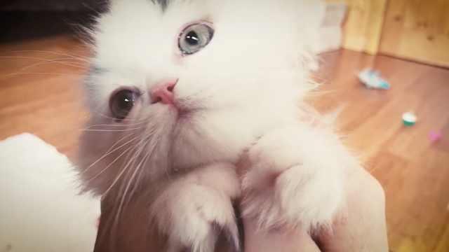 奶猫悠闲玩乐,还能享受专属按摩