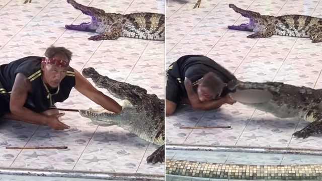 驯兽者与鳄鱼表演,胳膊差点被咬掉