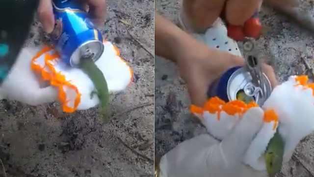 蜥蜴卡在易拉罐里,好心人将其救出