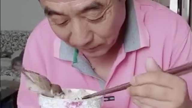 超有爱!老伯和小鸟同吃一碗饭