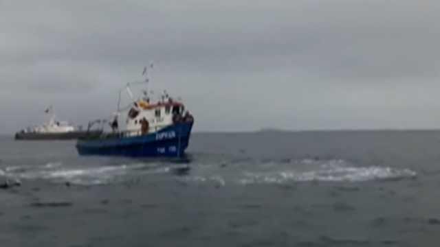 太棒了:齐心协力救出渔网中的鲸鱼