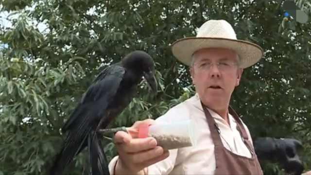 法国公园请乌鸦当清洁工,工作出色