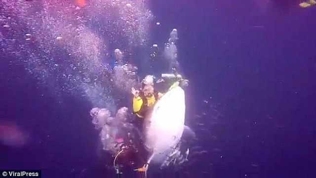 游客潜水欺负濒危鲸鲨, 已被逮捕