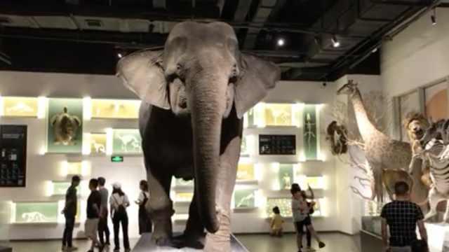 商场开自然博物馆,大象狮子