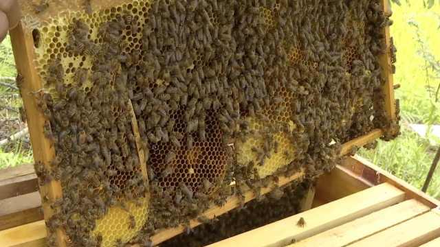 残疾男子养蜂创业:想帮更多人脱贫