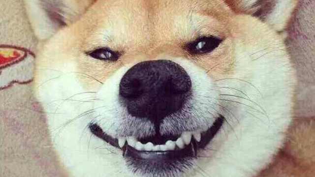 动物们是怎么保证牙齿健康的呢?