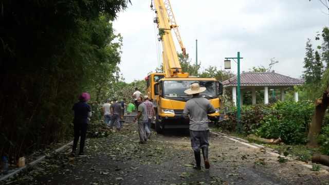 台风刮倒公园树木:停园4天清理打扫