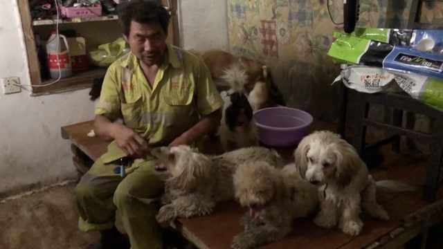 环卫工收养11只流浪狗,2年没买新衣