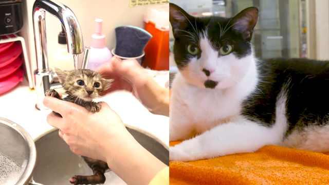 如何照顾刚出生小猫?让他们来教你