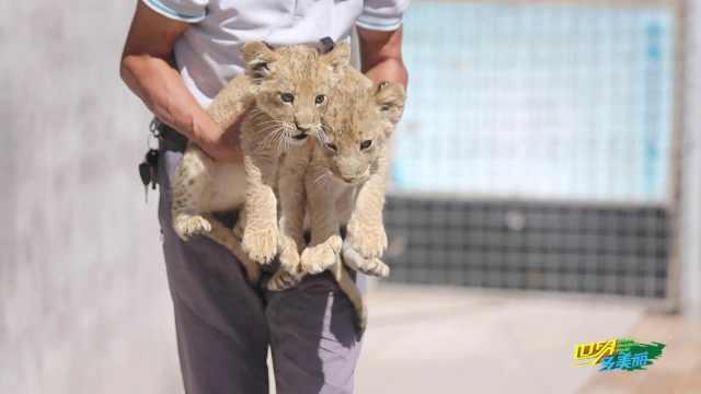 来鄂尔多斯动物园与动物们互动
