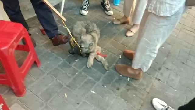 小贩当街捆狗卖狗肉,自称心中有佛