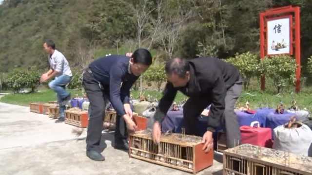 村民收购120只保护鸟,野保站解救