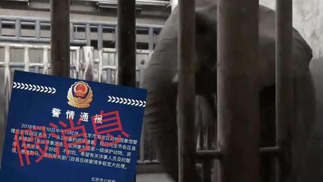 造谣动物园丢大象!男子被行拘3日