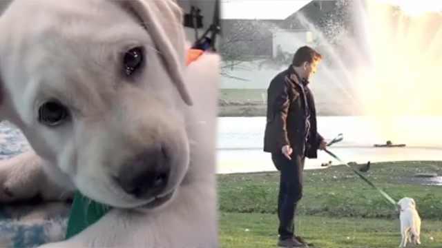 外出遛狗先拴绳!如何训练你的狗