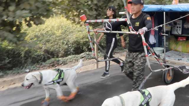 父女走7千里去丽江,2爱犬穿鞋跟随