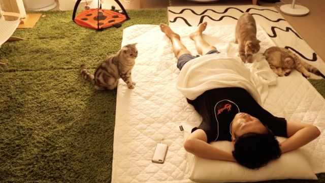 和主人一起睡觉,猫猫反应超乖巧!