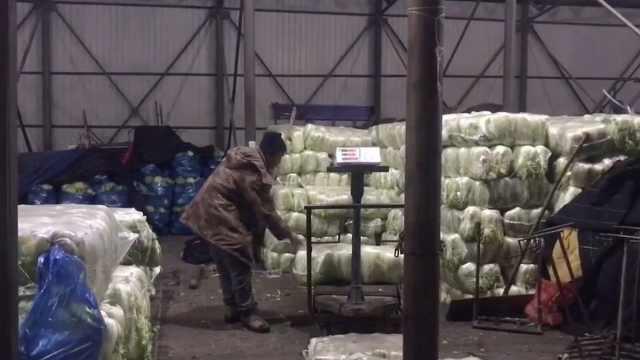 东北进入囤白菜季,摊贩1天卖6万斤