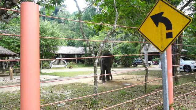 来到象岛大象营,近距离看大象