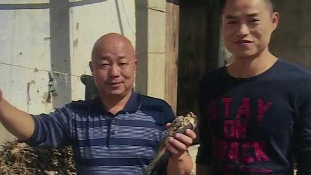 村民捡到红嘴鸟,竟是国家保护动物
