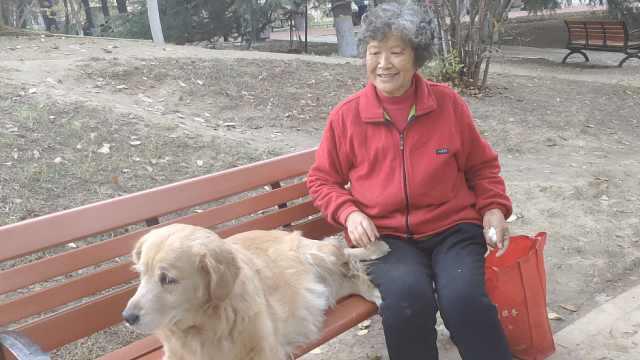 狗狗不知主人去世,公园里苦寻半年