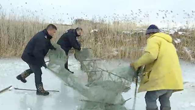 他凿冰非法捕千只林蛙,竟称为解馋