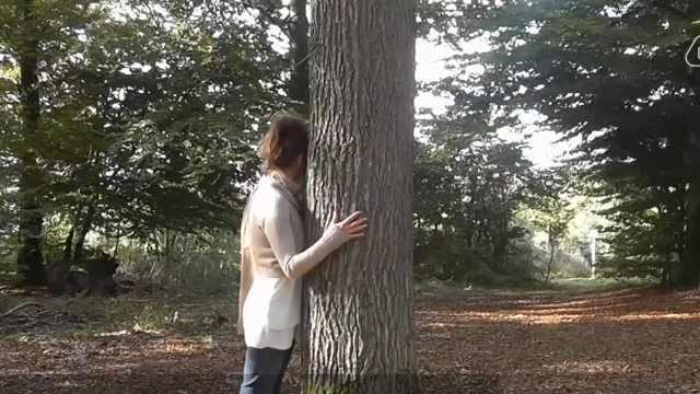 比利时森林浴抱抱大树就能降血压?