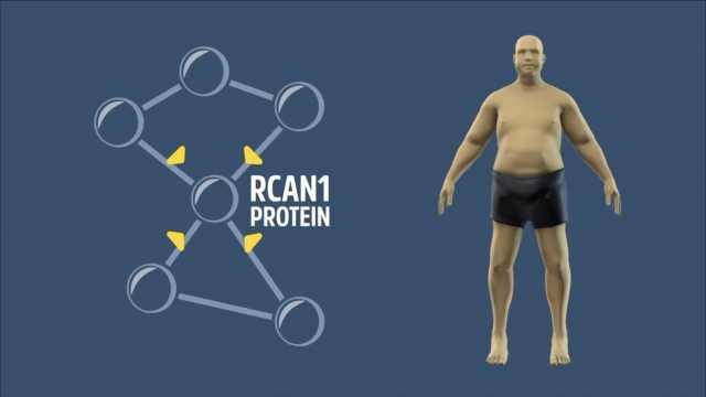 抑制这个基因,你或许可以光吃不胖