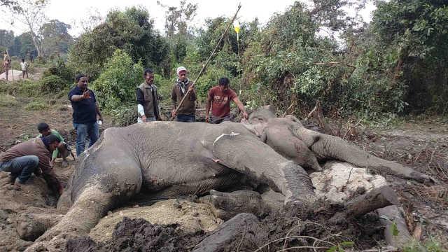 直播:马戏团被虐,印度开医院救大象