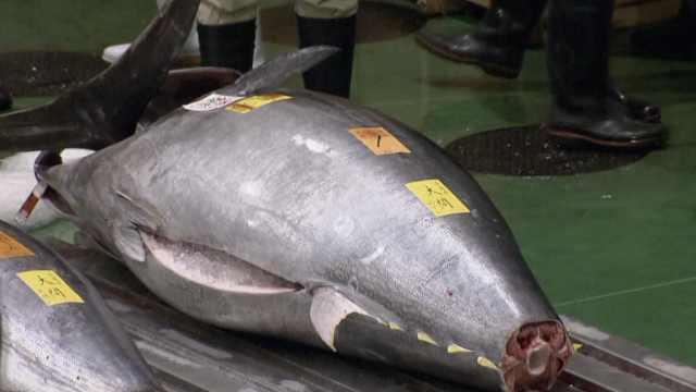 日本新年金枪鱼拍卖拍出3亿天价