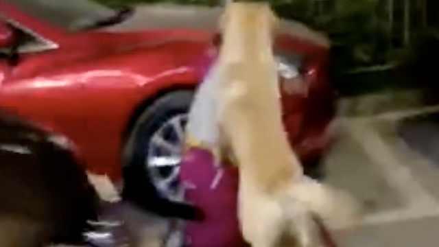 女子遭大狗扑咬,路人扫把打狗相救