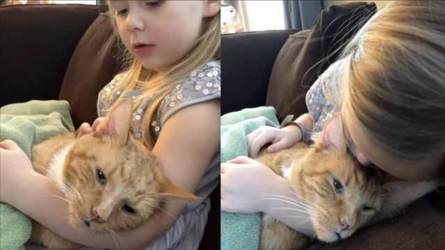 泪!4岁女孩唱歌送别陪她长大的猫