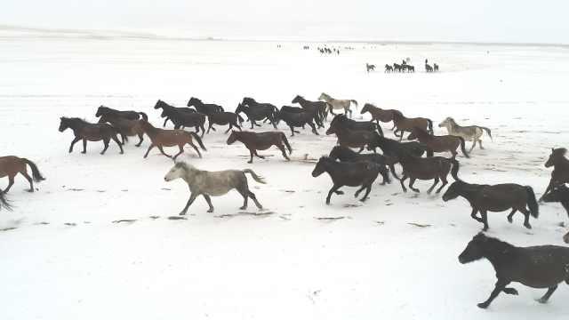 马蹄踏飞雪!甘肃山丹马场万马奔腾