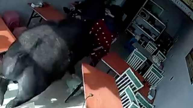 大黑牛冲进饭店顶翻2人,女子被吓哭