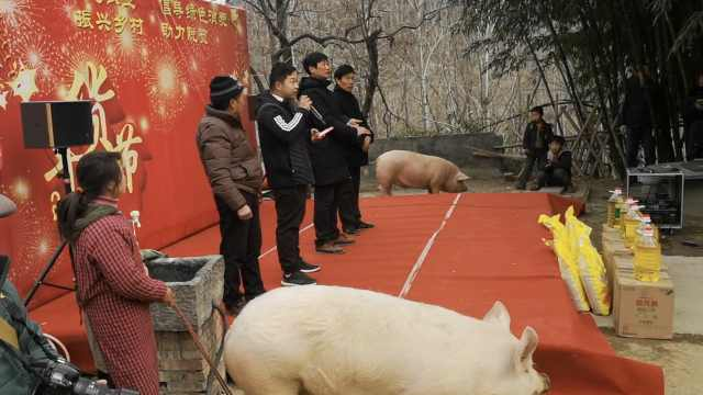 夫妻牵猪为儿年货节站台:请模特贵