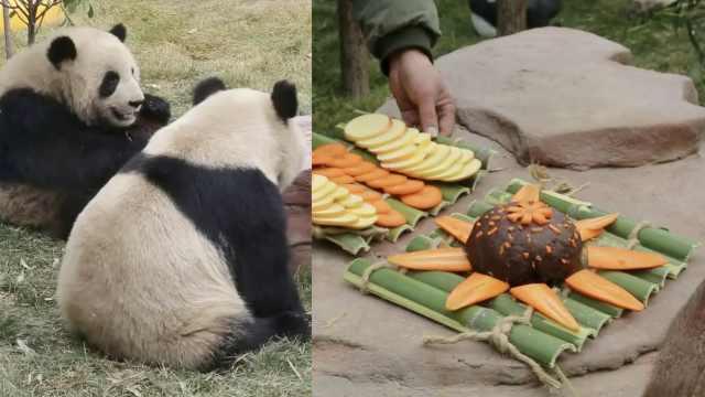 国宝年夜饭!熊猫竹子当餐盘吃这个