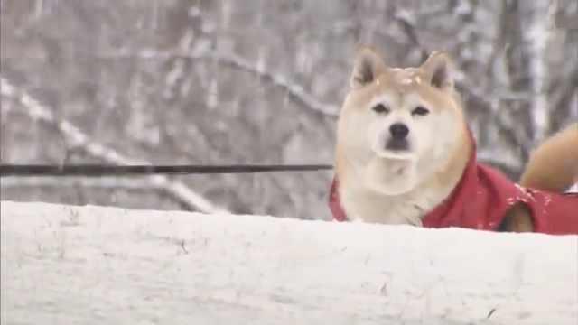 日本多地创低温纪录,泡面冻站起来