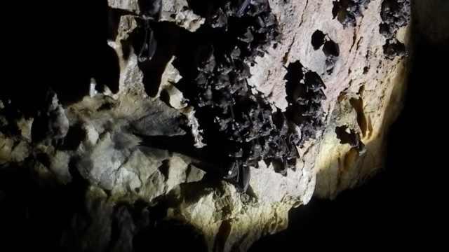 他们爬山遇蝙蝠洞,数百只倒挂冬眠