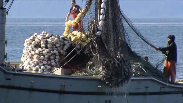 气候变暖已致中日海域鱼类锐减35%